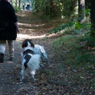 de-gezellige-huishond-00864