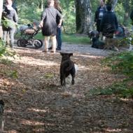 de-gezellige-huishond-00867