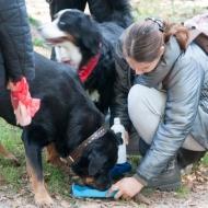 de-gezellige-huishond-00870