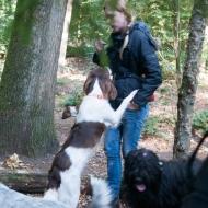 de-gezellige-huishond-00882