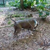 de-gezellige-huishond-00883